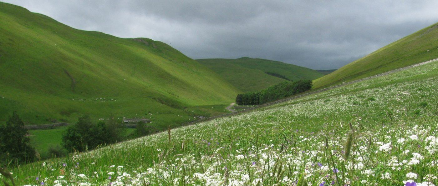 Barrowburn hay meadows habitats