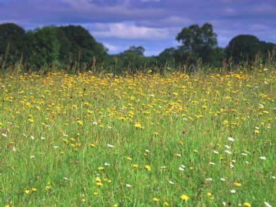Greenhaugh hay meadows
