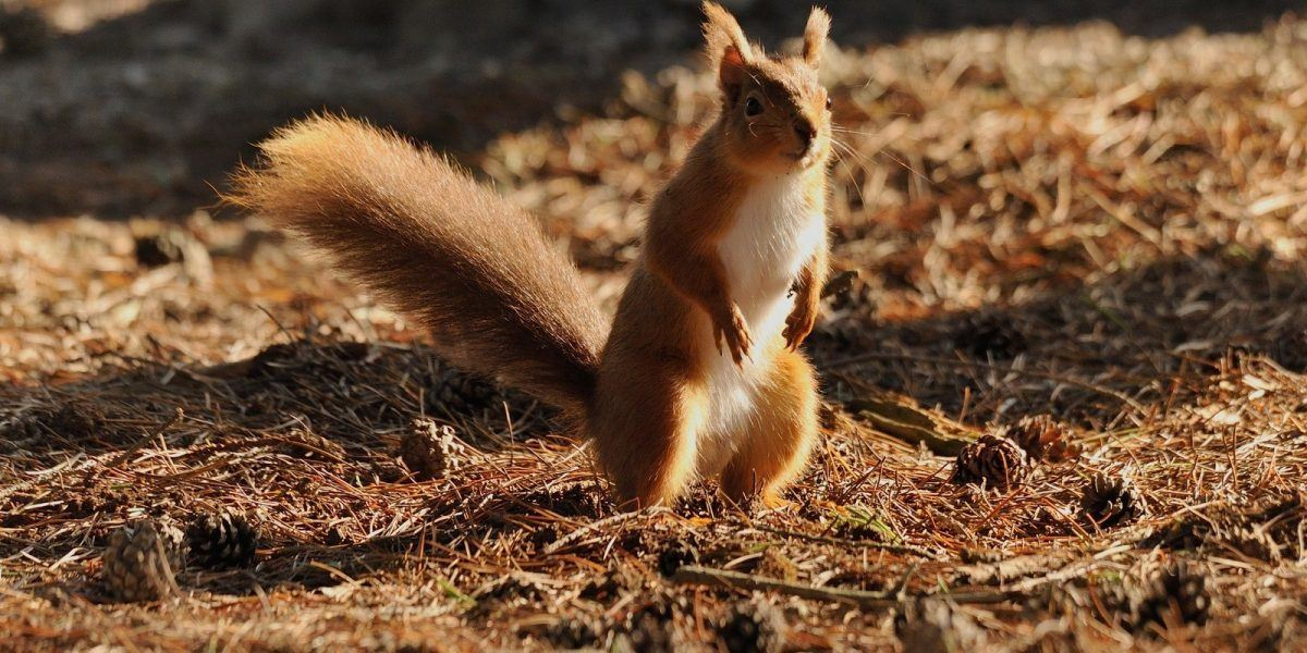Red Squirrels can be found in the National Park
