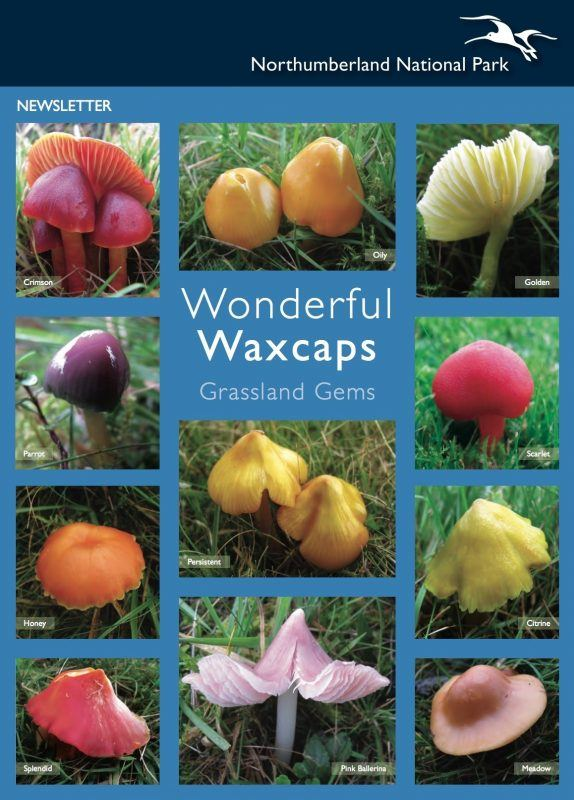 Waxcap newsletter