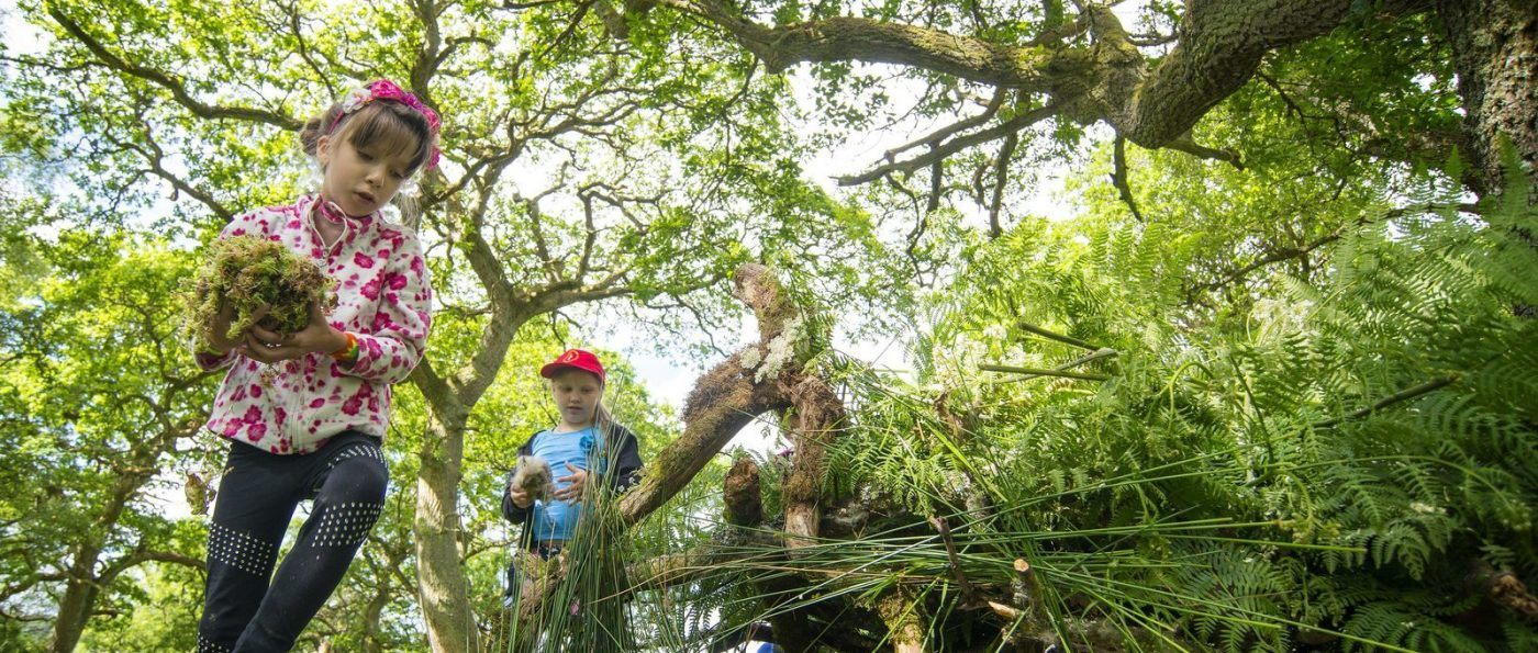 Children den making in a forest