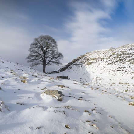 Sycamore Gap in the snow on Hadrian's Wall