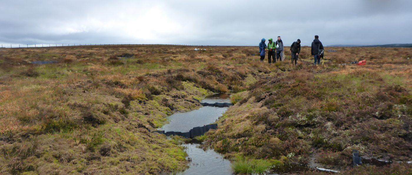 Peat restoration on the Lampert