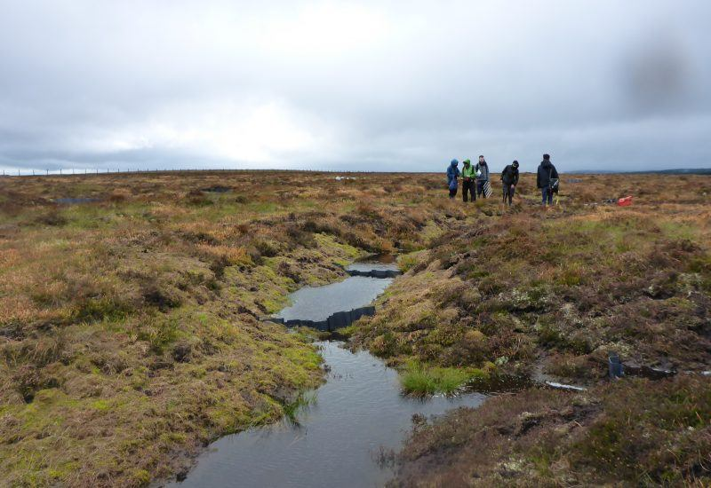 Volunteers working on the lampert peat bog
