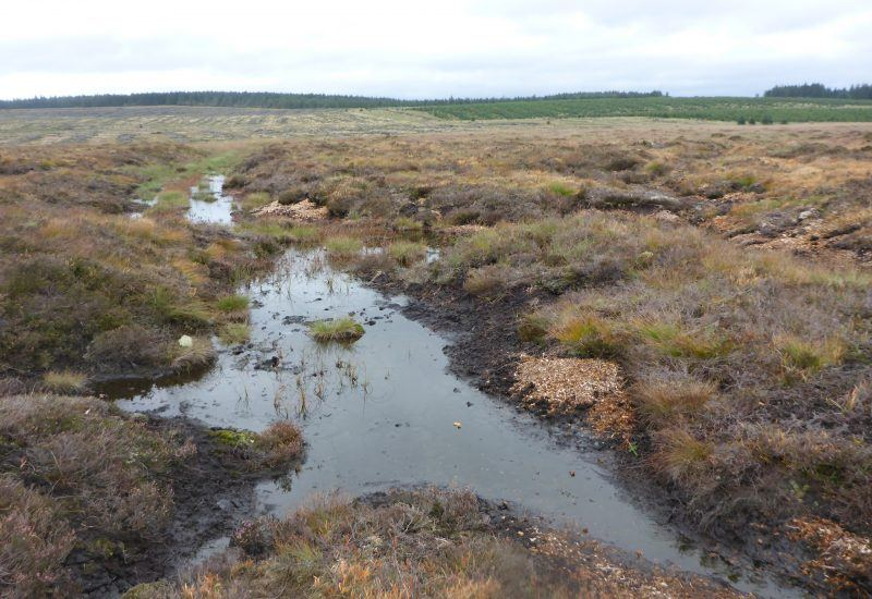 A photo of a gully bank that was reprofiled and the vegetation that was overhanging the edge was teased down the bare peat face