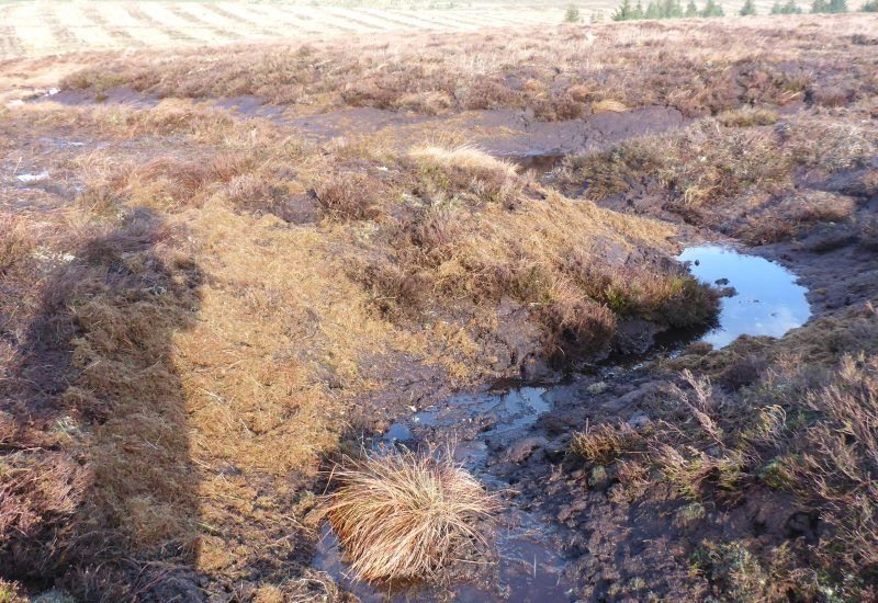 monitoring point during the peat work gully reprofiling