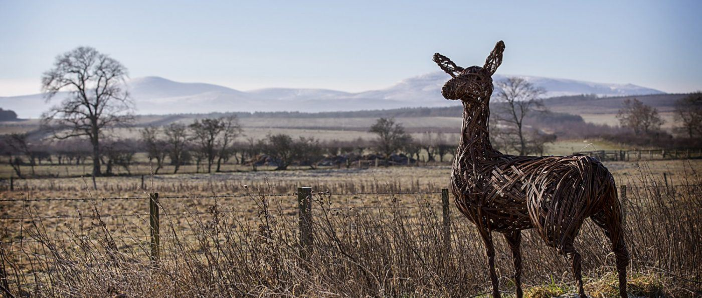 a willow deer standing in the landscape