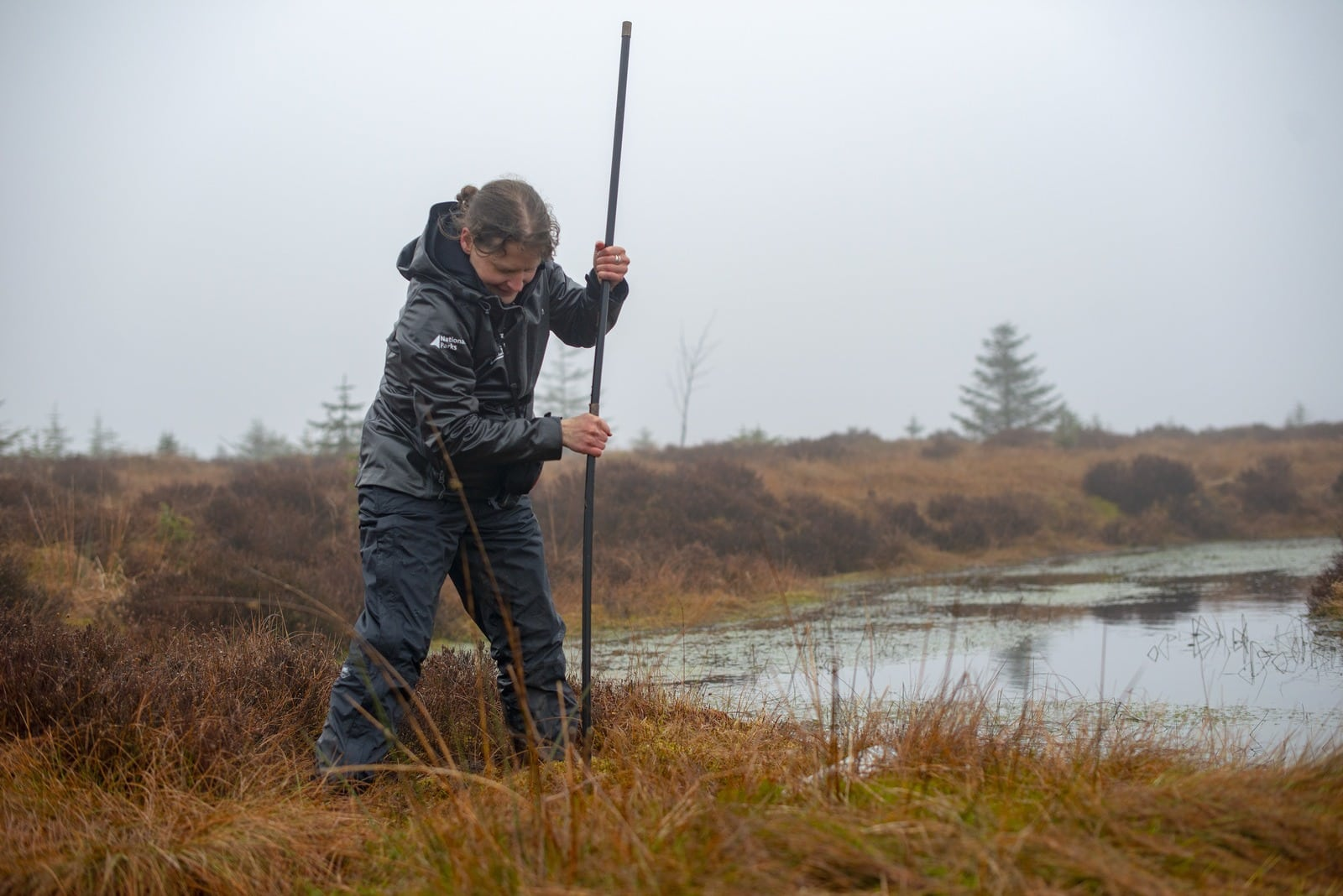 A National Park Officer measuring peat depths using peat rods