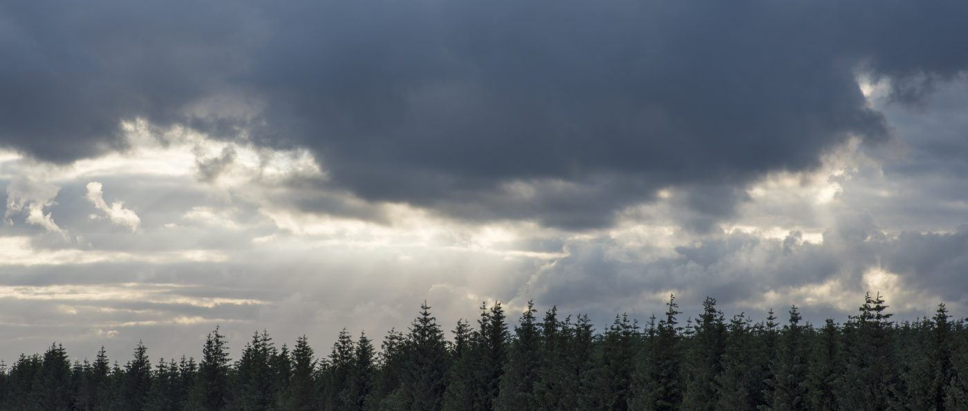 Stormy skies over the conifers of Wark Forest in the Northumberland National Park, England