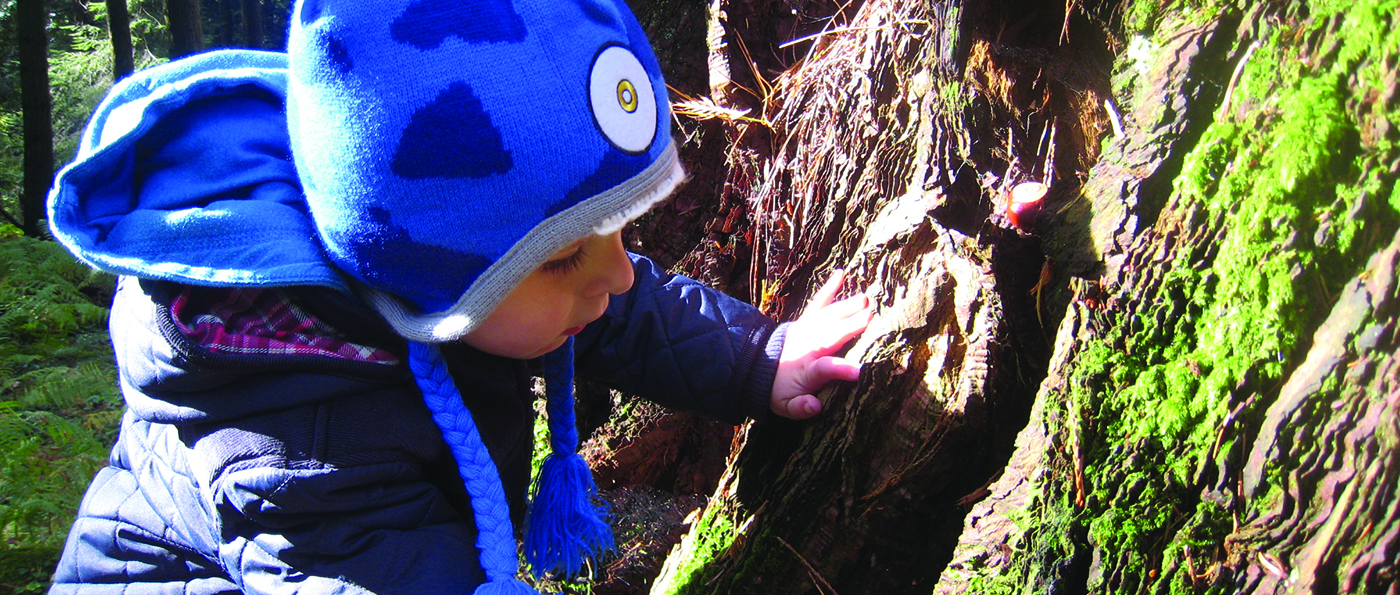 A young child examining the bark of a tree