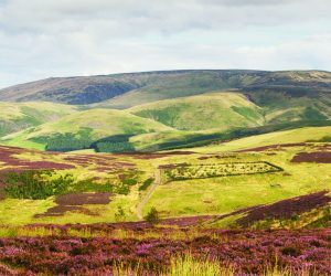 A view of The Cheviot in Northumberland National Park