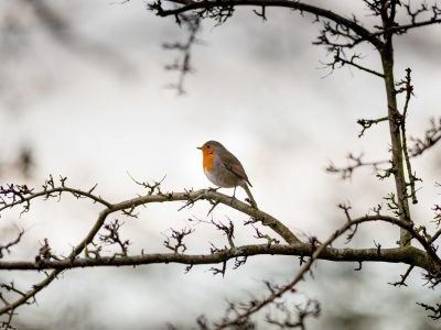 A small robin sitting on a tree branch