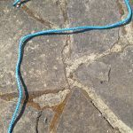 A blue piece of rope on a stone floor