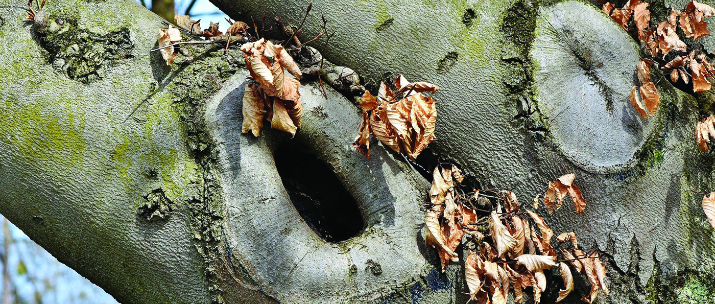 A dried out hole within a tree