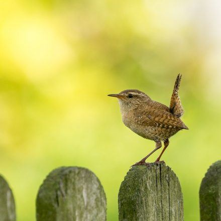 A ren on a fence Image by marliesplatvoet from Pixabay